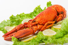 Cooked and boiled red lobster Royalty Free Stock Photo