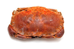 Cooked brown crab Royalty Free Stock Image
