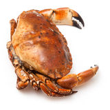 Cooked brown crab Stock Photo