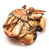 Cooked brown crab Stock Image