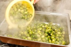 Cooked brussel sprouts Royalty Free Stock Photo