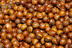 Cooked chestnuts pile Stock Image