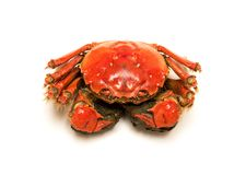 Cooked Chinese hairy crab on white royalty free stock images