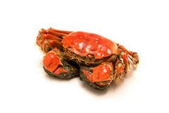 Cooked Chinese hairy crab on white stock photos
