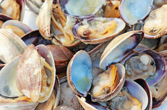 Cooked Clams Royalty Free Stock Photos