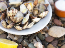 Cooked Clams Stock Image