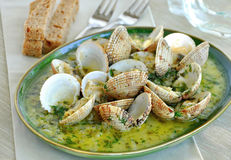 Cooked clams in white wine sauce Royalty Free Stock Photos