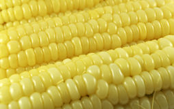 Cooked corn. A closeup view of yellow kernels of fresh cut, cooked corn Stock Images