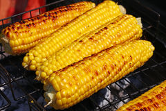 Cooked corn cobs on barbecue grill Stock Photos