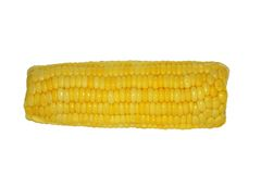 Cooked corn isoleted. Cooked corn on a white backgrownd royalty free stock images
