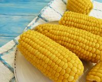Cooked corn, a plate autumn healthy nutrition fresh natural agriculture ingredient food appetizer on a blue wooden background,. Cooked corn a plate on a blue royalty free stock photo