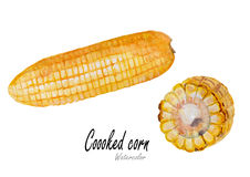 Cooked corn. set .Hand drawn watercolor painting on white background Stock Image