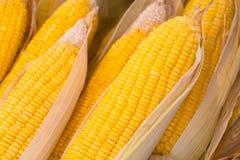 Cooked corncob Royalty Free Stock Photo