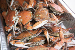 Cooked crab Stock Image