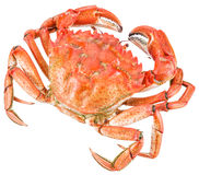 Cooked crab. Royalty Free Stock Photos