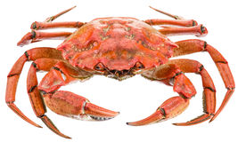 Cooked crab. Stock Photo