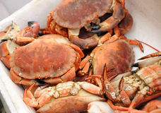 Cooked crab on the fishmongers stall Stock Photo