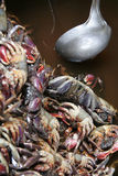 Cooked crab, food at market, Cambodia. Fresh Sea Food : Colorful crab soup available on cambodian market Stock Photography