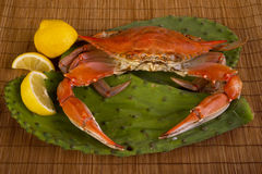 Cooked Crab. Stock Photos