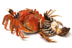 Cooked crab Stock Images
