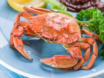 Cooked crab with lemon and herbs. Stock Image