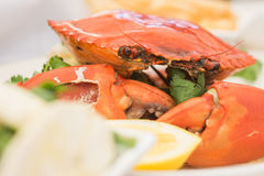 Cooked crab on a plate, close up Royalty Free Stock Photography
