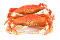 Cooked crab on white Stock Photography