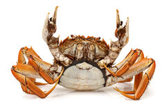 Cooked crab Stock Photography