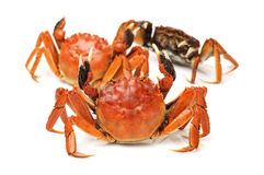 Cooked crab Stock Photos