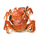 Cooked crab Royalty Free Stock Photo