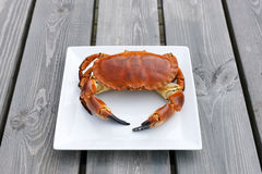 Cooked crab on white plate Royalty Free Stock Images