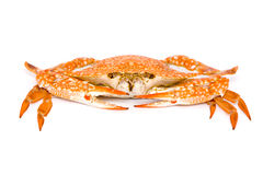 Cooked crabs Royalty Free Stock Images