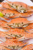 Cooked crabs Royalty Free Stock Image