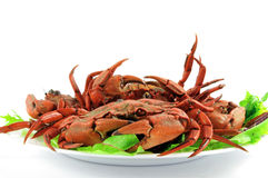 Cooked crabs Stock Image