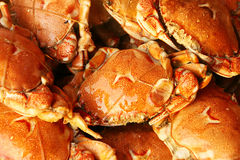 Cooked crabs Royalty Free Stock Photography