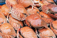 Cooked Crabs Stock Images