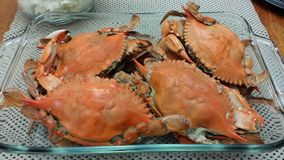 Cooked Crabs. Fresh cooked crabs with shell stock photography
