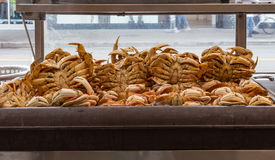 Cooked crabs in a refrigerator at a crab shack in San Fransisco, Royalty Free Stock Photo