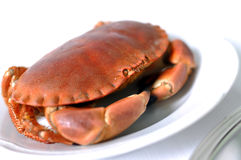 Cooked crabs on white plate Stock Images