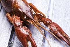 Cooked Crawdad Stock Photography