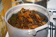 Cooked crawfish, delicacy. royalty free stock photo