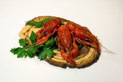 Boiled crawfish, green parsley on a light background. stock photos