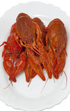 Cooked crawfish group closeup Royalty Free Stock Images