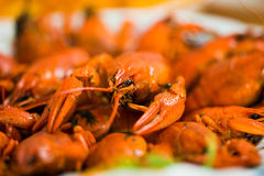 Cooked Crawfish Royalty Free Stock Photo
