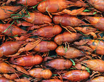 Cooked crayfish Stock Images
