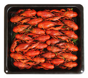 Cooked crayfish Stock Photography