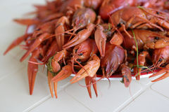 Cooked crayfish Stock Photo