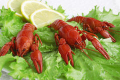 Cooked crayfish plate. Cooked crayfish on salad plate Stock Image