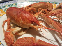 Cooked crayfish Royalty Free Stock Images