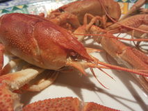 Cooked crayfish. Red crayfish on a plate, ready for eat Royalty Free Stock Images